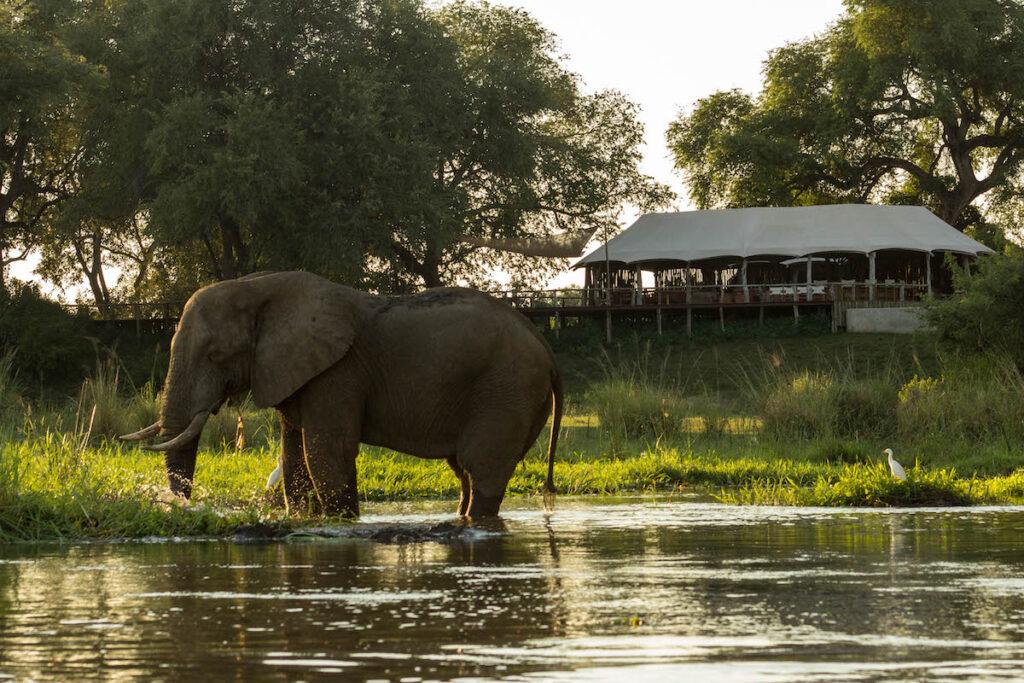 Elephant At Anabezi Lodge