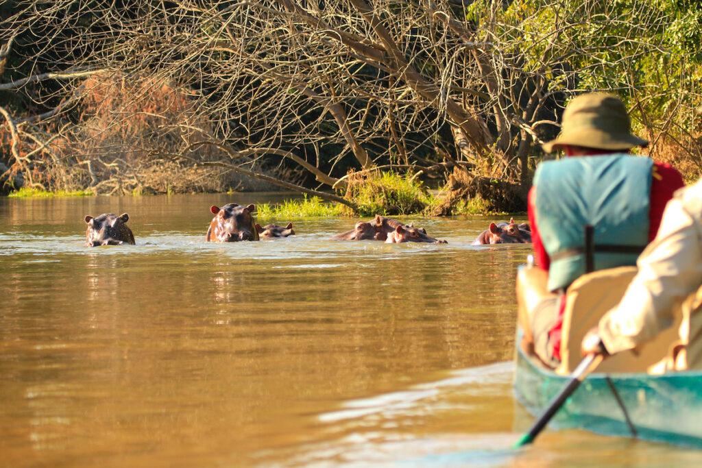 Private canoe safari with hippos.