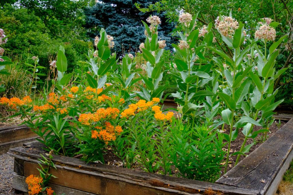 Martha Springer Botanical Garden.