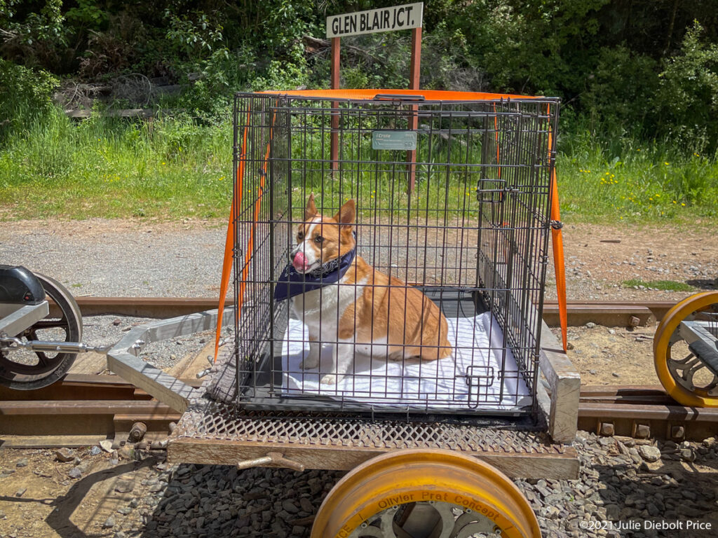 Dog in a cage on railbike