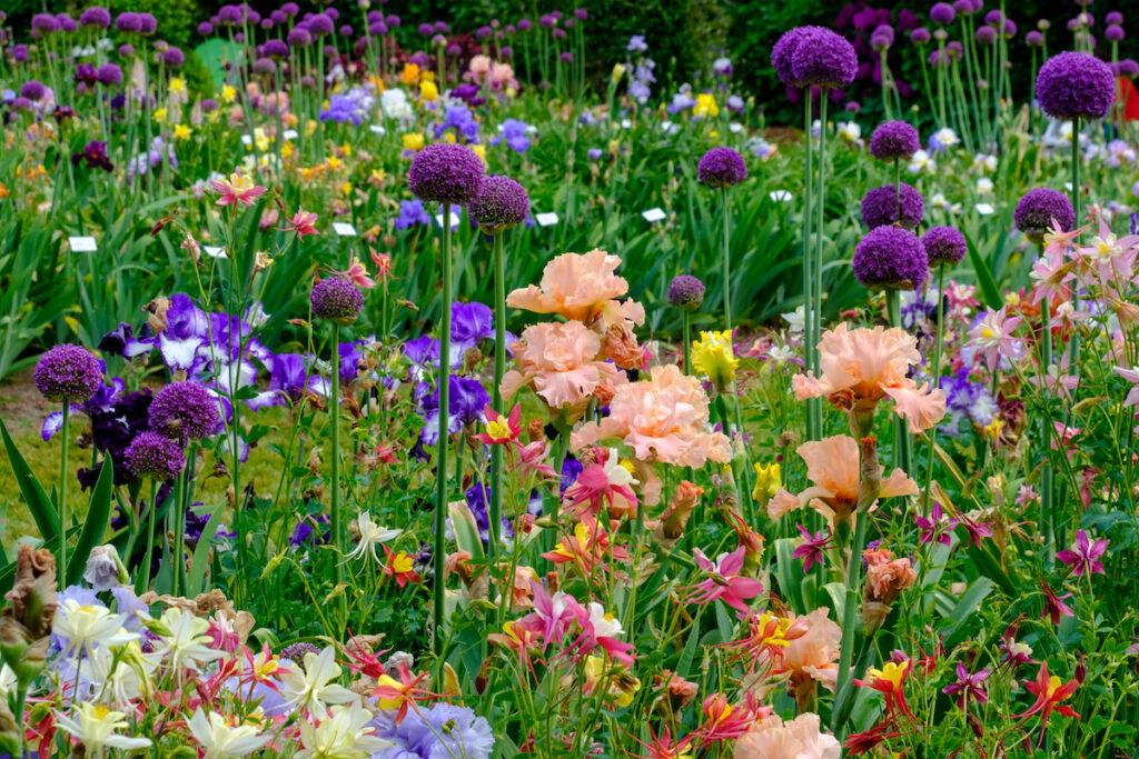 Schreiner's Iris Gardens.