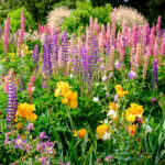 Schreiner's Iris Gardens