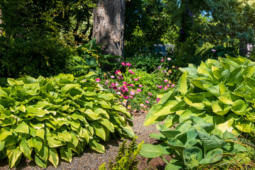 Pathway, ferns and flowers at Sebright Gardens.