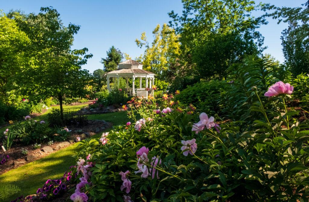 Pathway and white gazebo at Sebright Gardens.