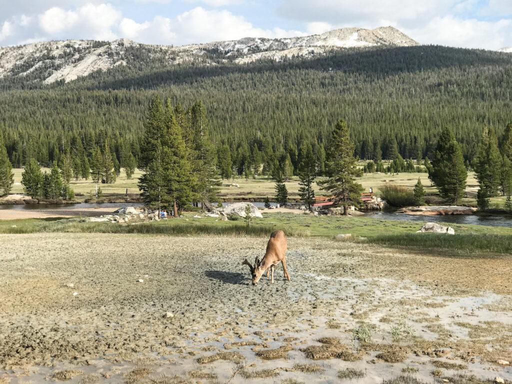 Tuolumne Meadows, Yosemite National Park.