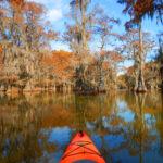 Canoeing in Caddo Lake, Texas, near cypress trees.
