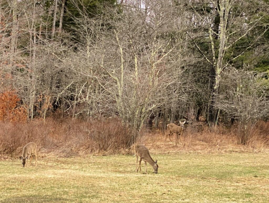 Deer in Chief Logan State Park