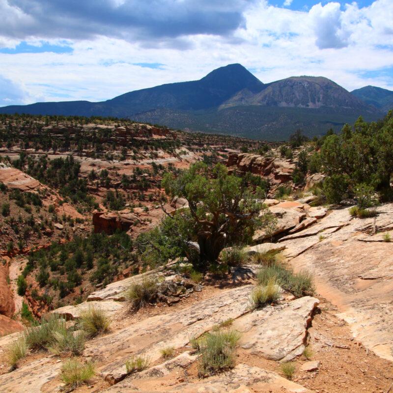 Canyon of the Ancients. Cortez, Colorado.