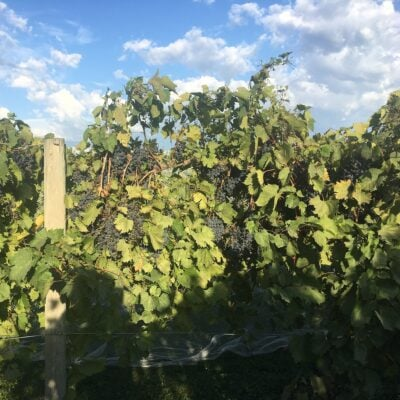 Cellar 426 Winery