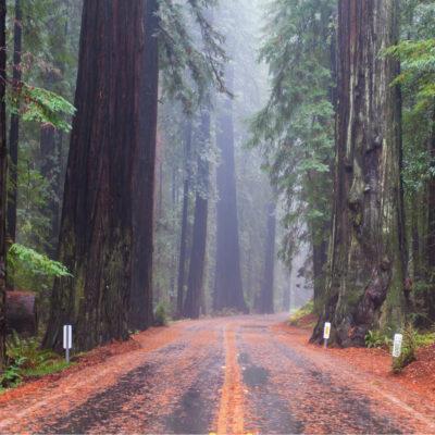 Road through Redwood National Park, California.