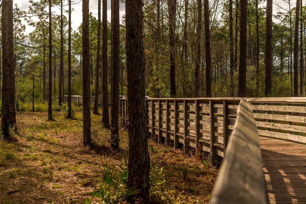 Tarkiln Bayou State Park, Pensacola, Florida.