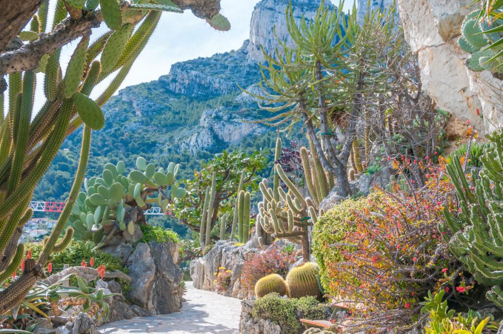 Dessert Botanical Garden pathway.
