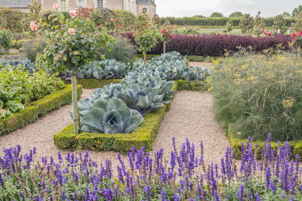 Le potager et le potager des Jardins de Villandry.