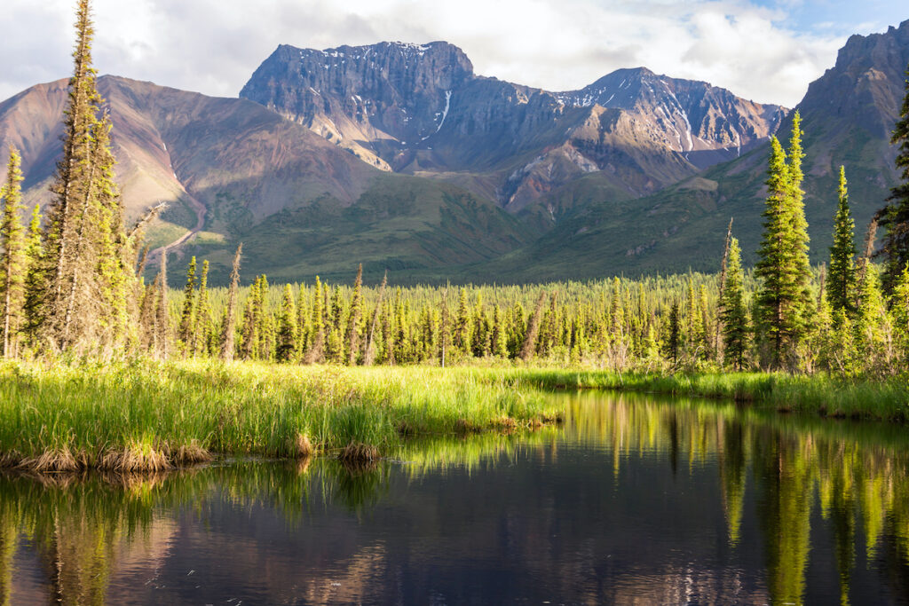 Extinct Skookum Volcano is reflected in a still beaver pond at the Jack Creek Wayside along the Nabesna Road in Wrangle St. Elias National Park.