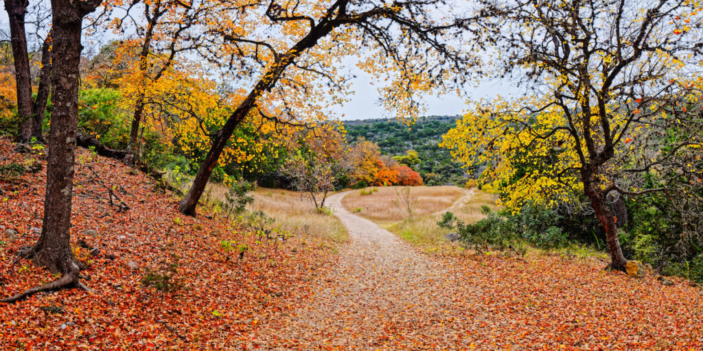 A Walk through the Maple Forest at Lost Maples State Natural Area.