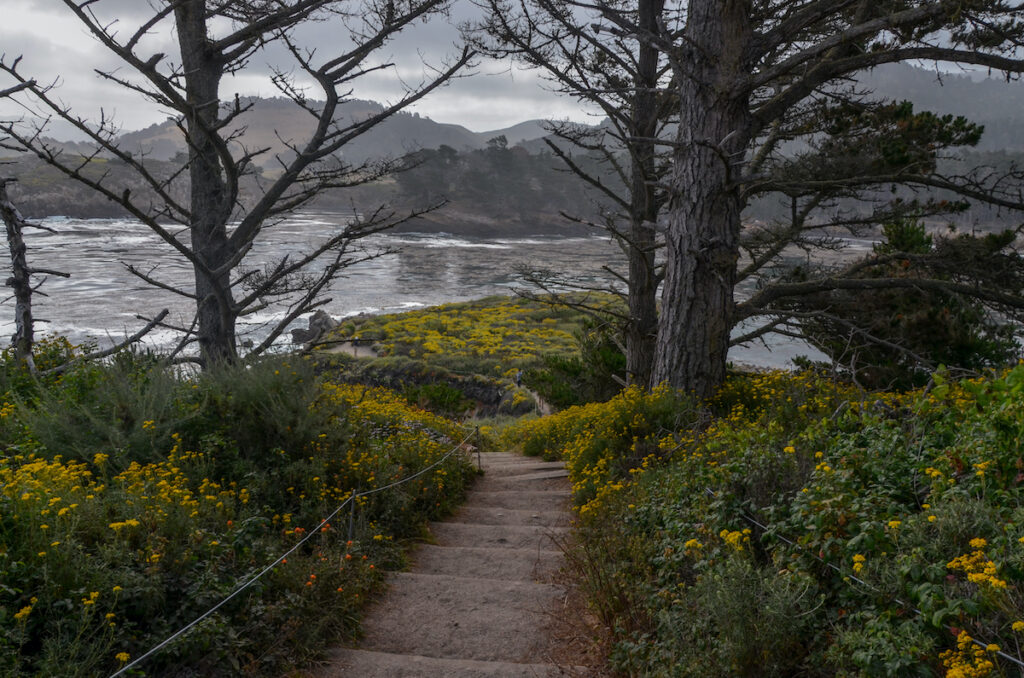 Stairs on the North Shore Trail near Whaler's Cove at Point Lobos State Natural Reserve.