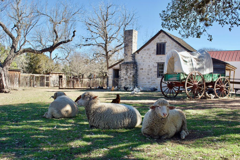 heep and a covered wagon at Lyndon B. Johnson State Park and Historic Site and the Sauer-Beckmann Farmstead.