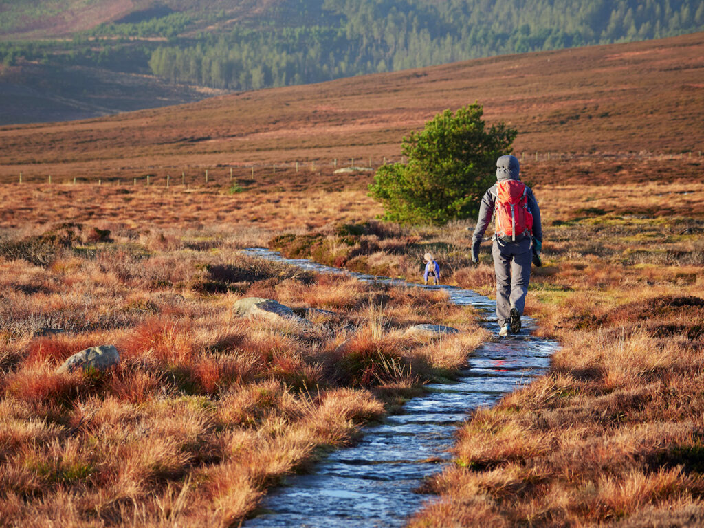 Hiker and dog near Rothbury in Northumberland County, England.