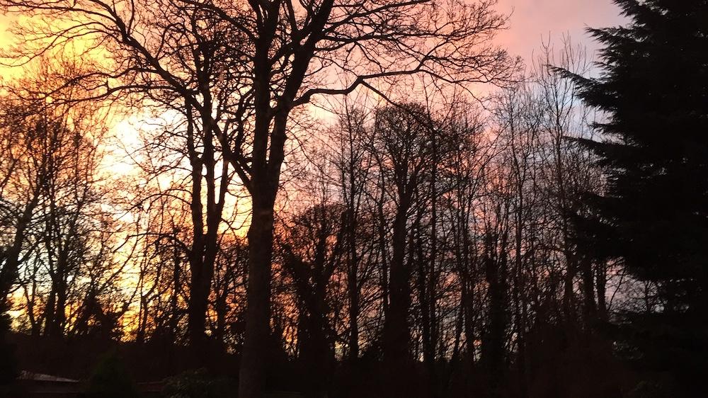 sunrise through the trees in Edinburgh, Scotland