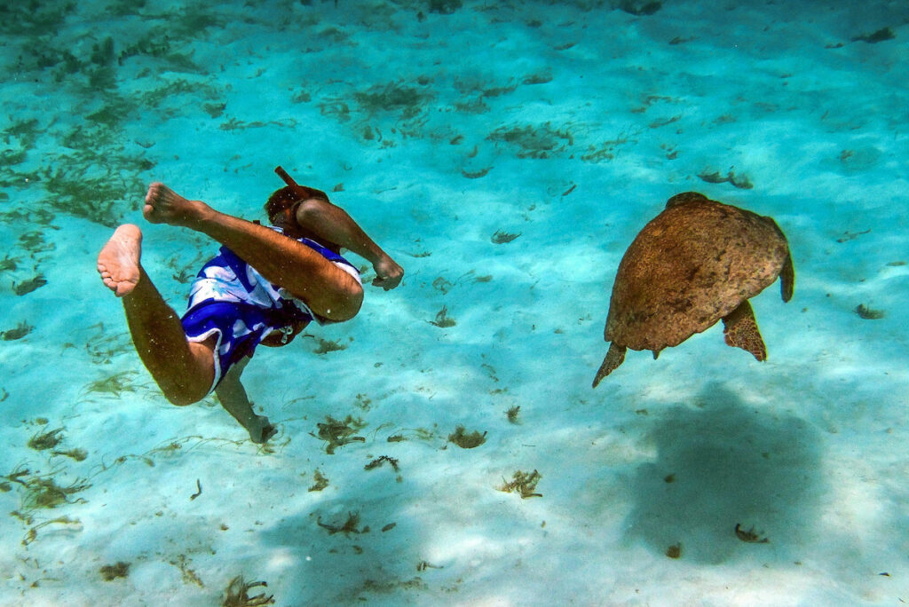 Snorkeling with a turtle in Belize