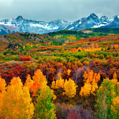 Leaves changing during fall in Colorado