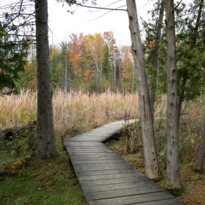 Boardwalk in Jack Pine Trail during Autumn. Ottawa, Ontario. Canada.