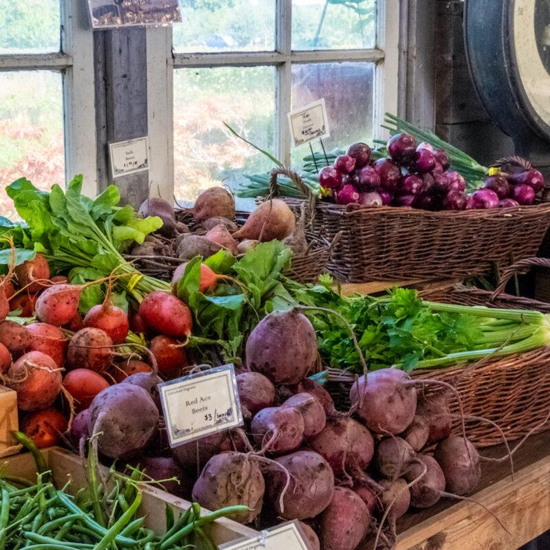 Vibrant produce at Groundwork Organics.