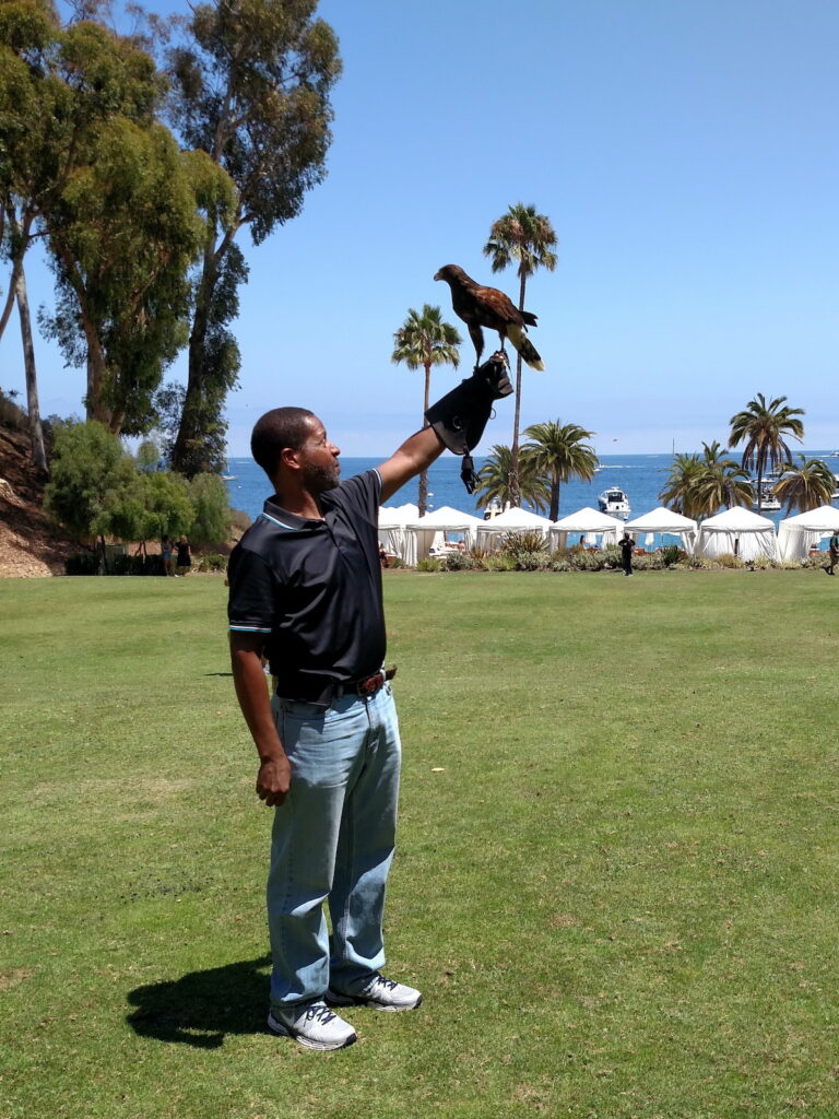 The author stands outside with holding up Duke, a Harris's hawk.