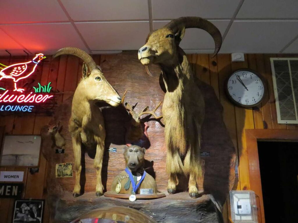 Wild game hanging on the wall at Ole's Steakhouse.