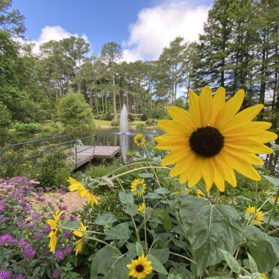 Cape Fear Botanical Gardens in Fayetteville, North Carolina.