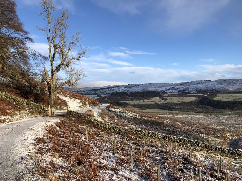 A walk from Dunkeld, Scotland.