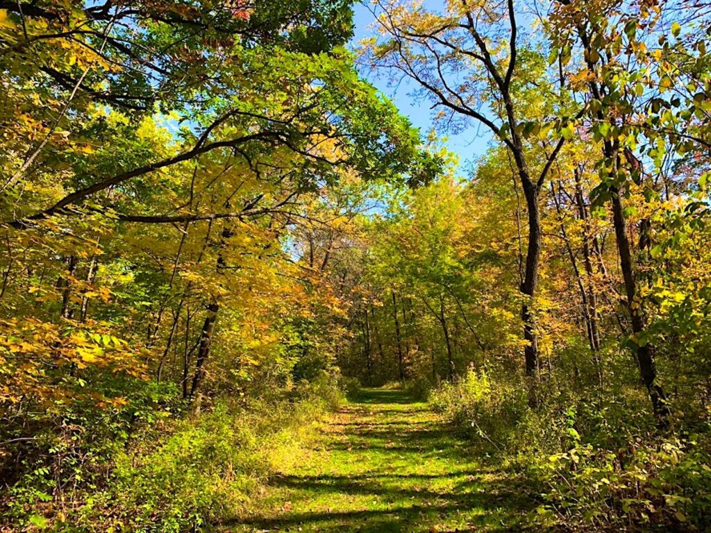 Ice Age Trail grassy woodland path during fall and in the afternoon.