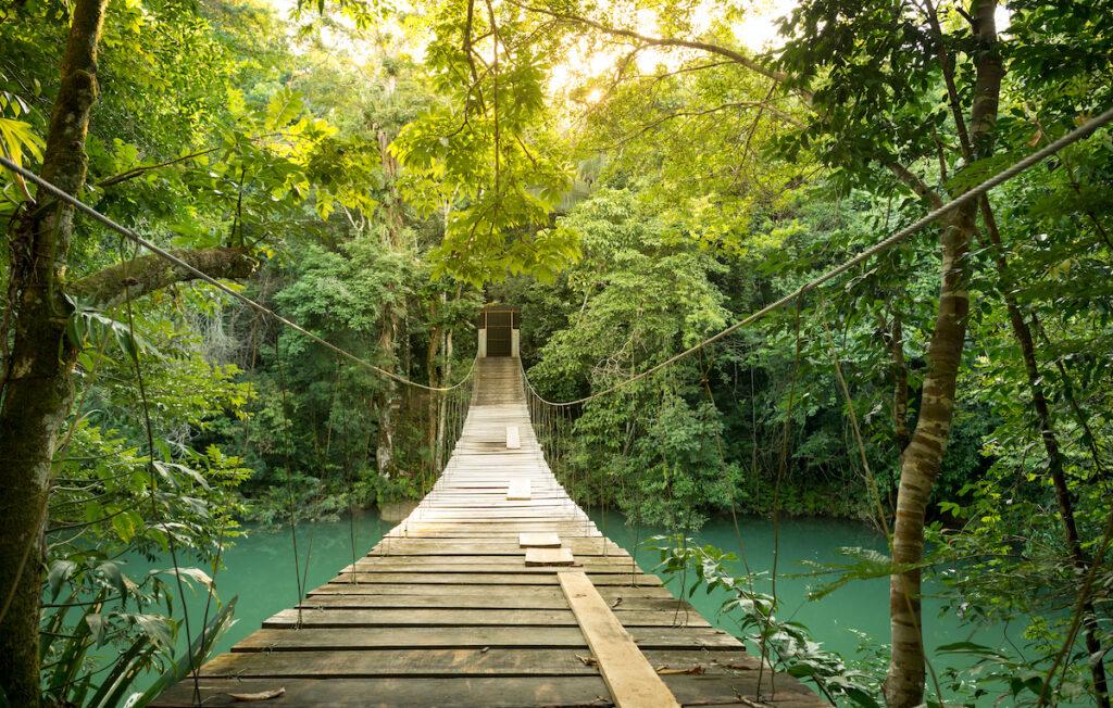 Jungle footbridge in Belize