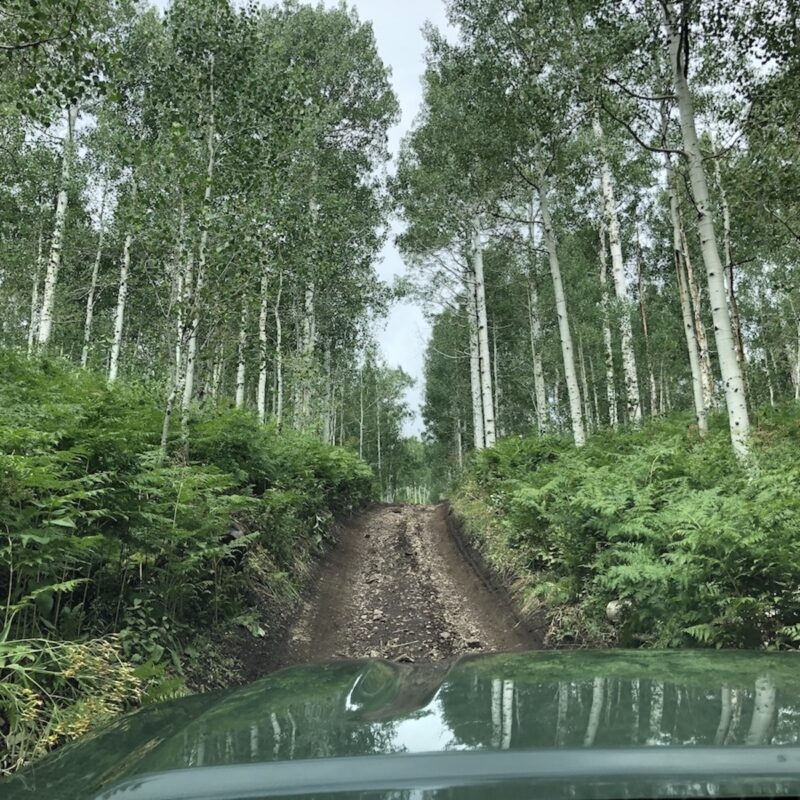 off-roading through mountain aspens in Utah