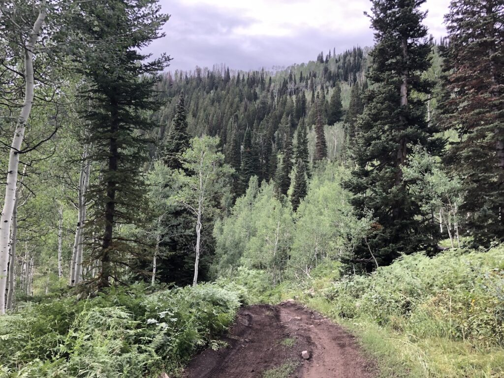 Tall trees line the curved and muddy dirt trail.