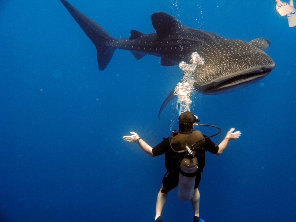 Scuba diving with a shark in Belize.