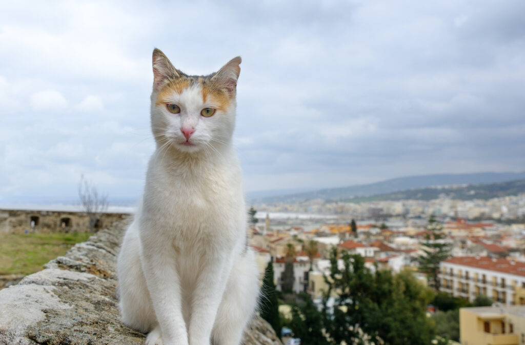 White cat purchase relaxed at the edge of a city rooftop.