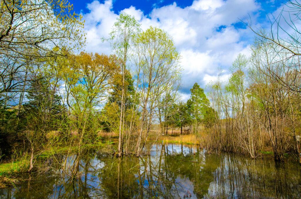 Strawberry Plains Audubon Center; Holly Springs, Mississippi