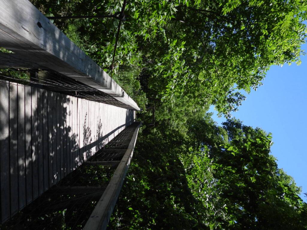 Suspension bridge at Guye Woods Park