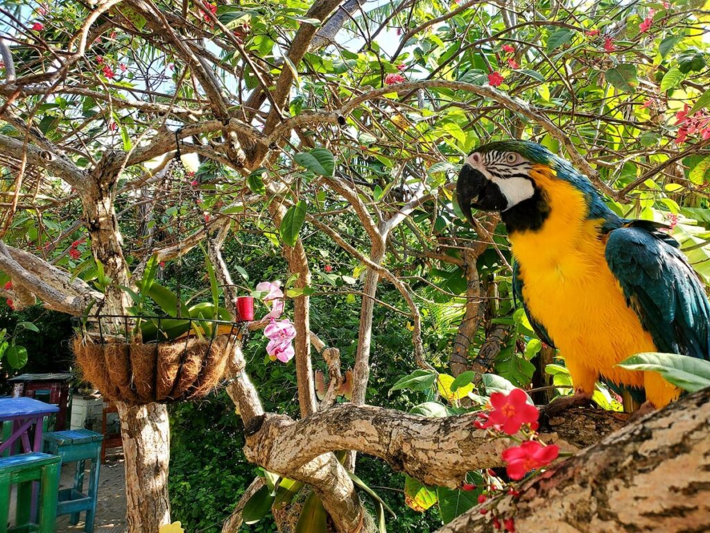 Toucan resting on a branch in the Beer Garden.