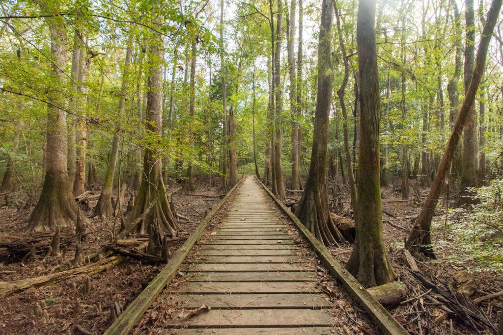 Congaree National Park in South Carolina during fall.