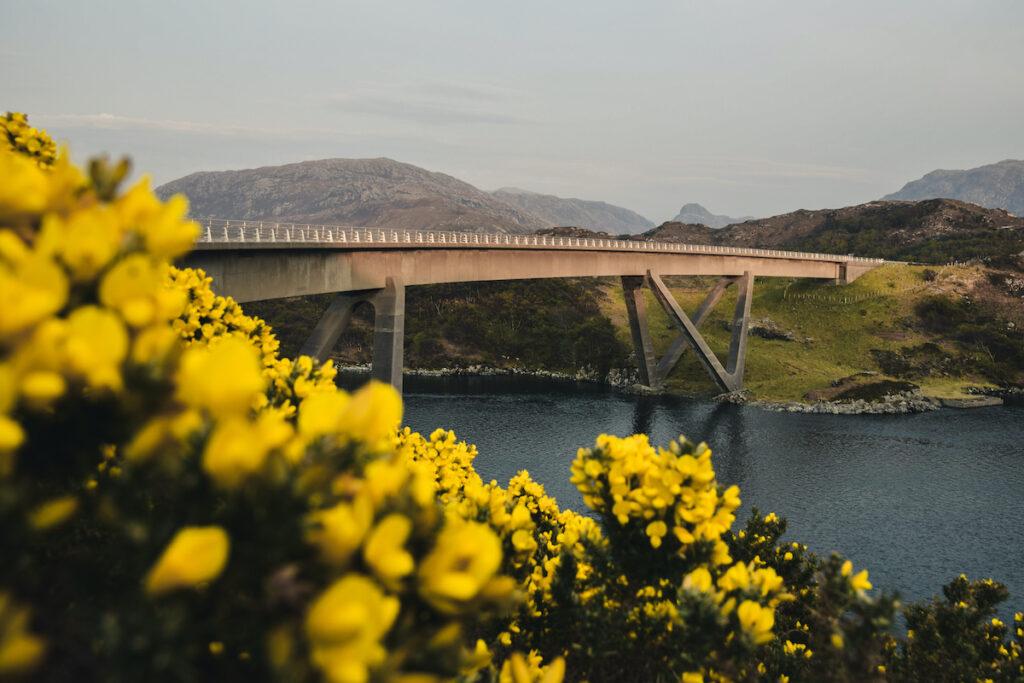Flowers bloom near the Kylesku Bridge, Scotland.