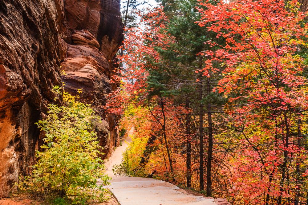 Zion Canyon National Park, Utah, during fall.