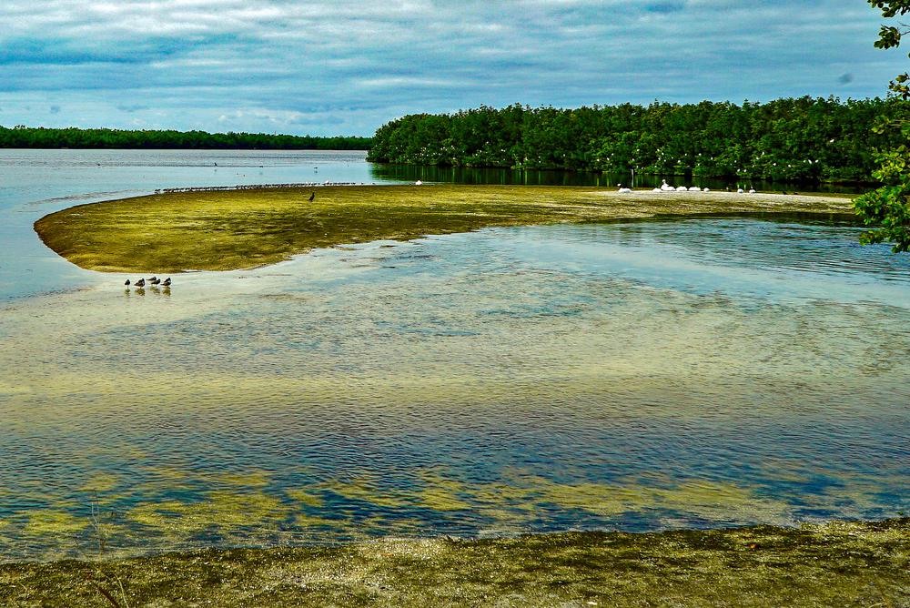 "Lake at J. N. ""Ding"" Darling National Wildlife Refuge. Sanibel Island, Florida."