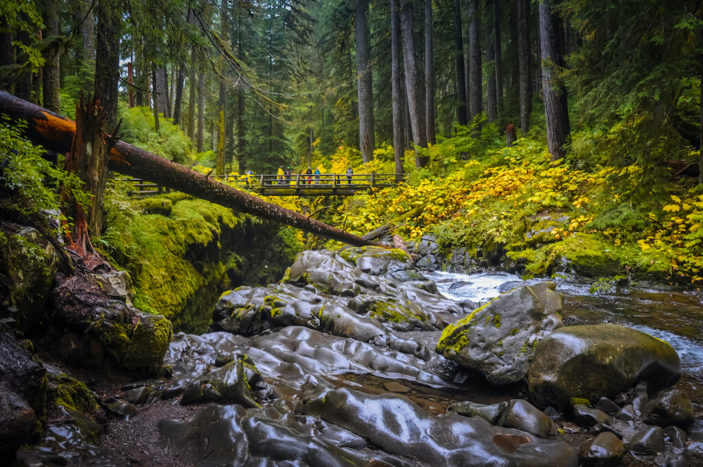 Sol Duc Falls at Olympic National Park during fall.