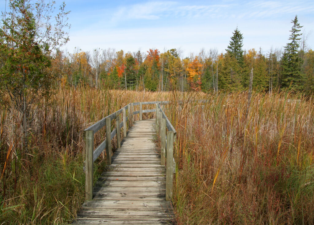 Boardwalk on Jack Pine Trail. Ottawa, Ontario. Canada.