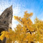 Bordeaux cathedral spire behind gingko tree with yellow leaves.