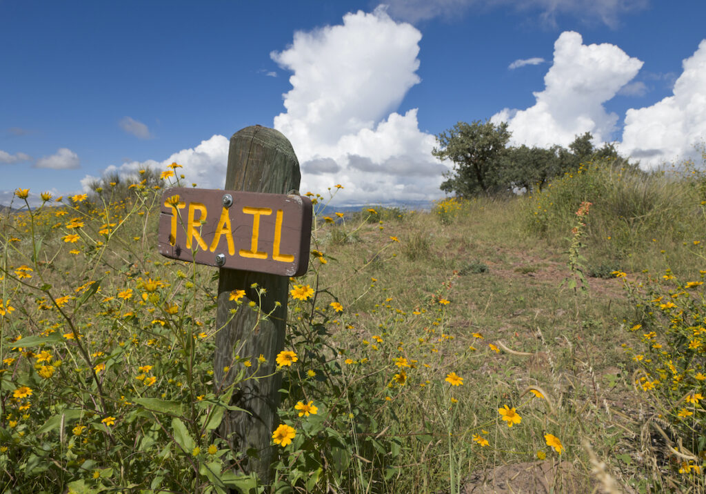 Wooden trail sign with wild daisies growing at Davis Mountains State Park.