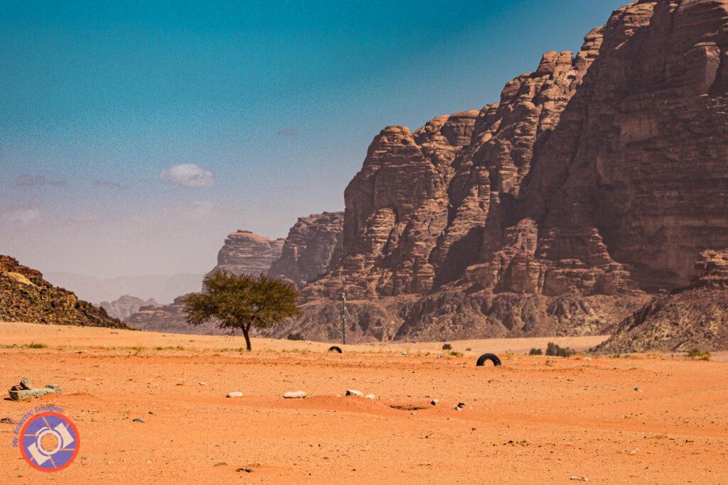A rare tree in Wadi Rum, Jordan.