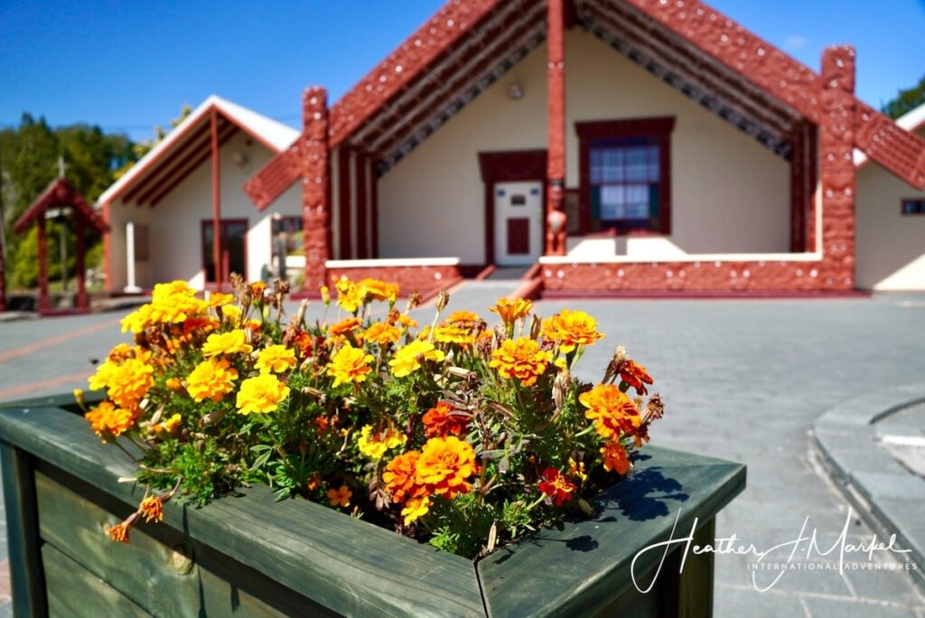 Exterior of a Marae in Rotorua with yellow flowers in flower bed out front.